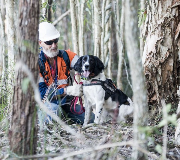 Koala detection dog 2